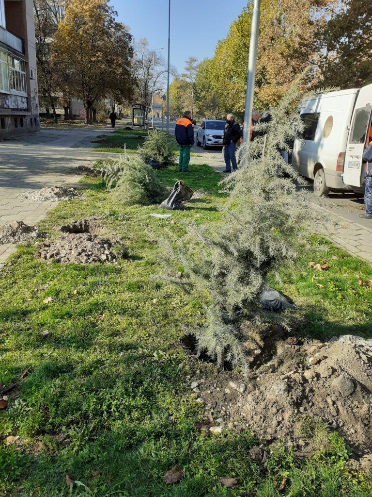 """Район """"Централен"""" стартира залесителна кампания"""